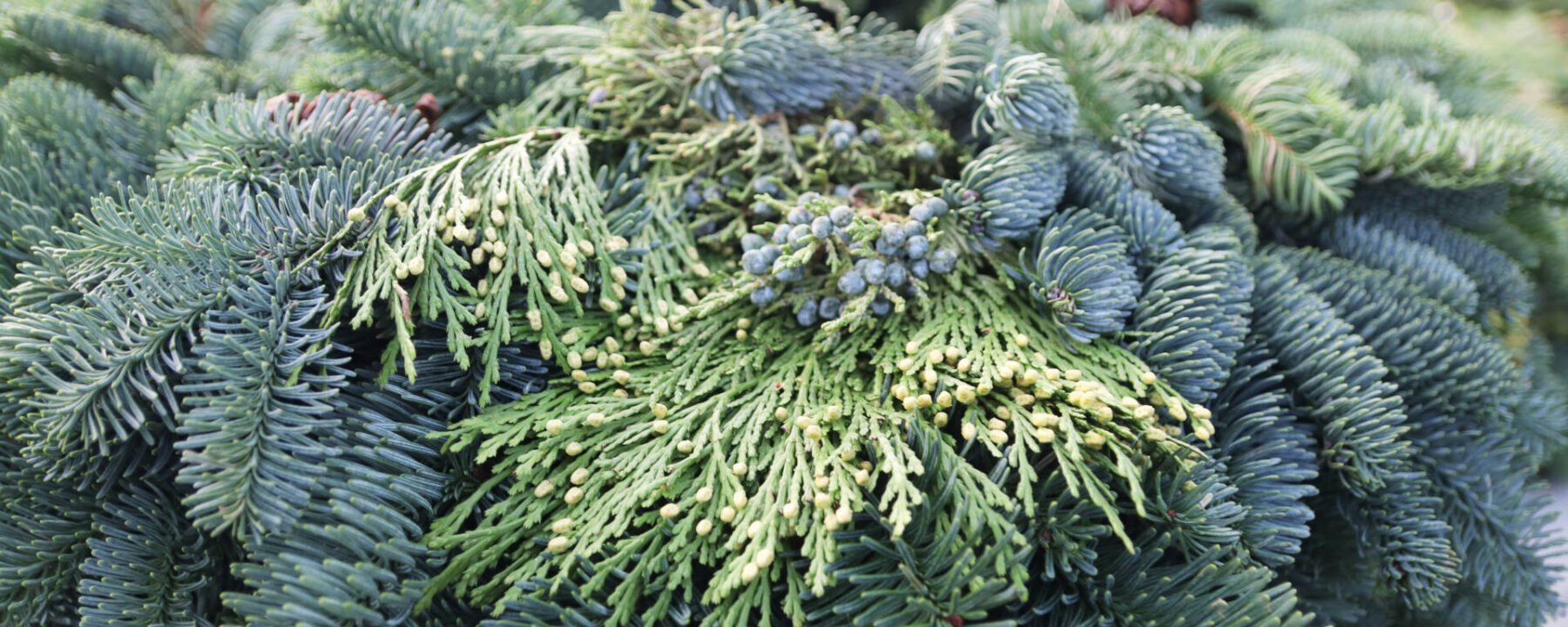 Fresh Wreaths and Greens at Flowerland