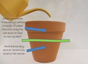 Wet soil on top and dry soil below will result in plant problems