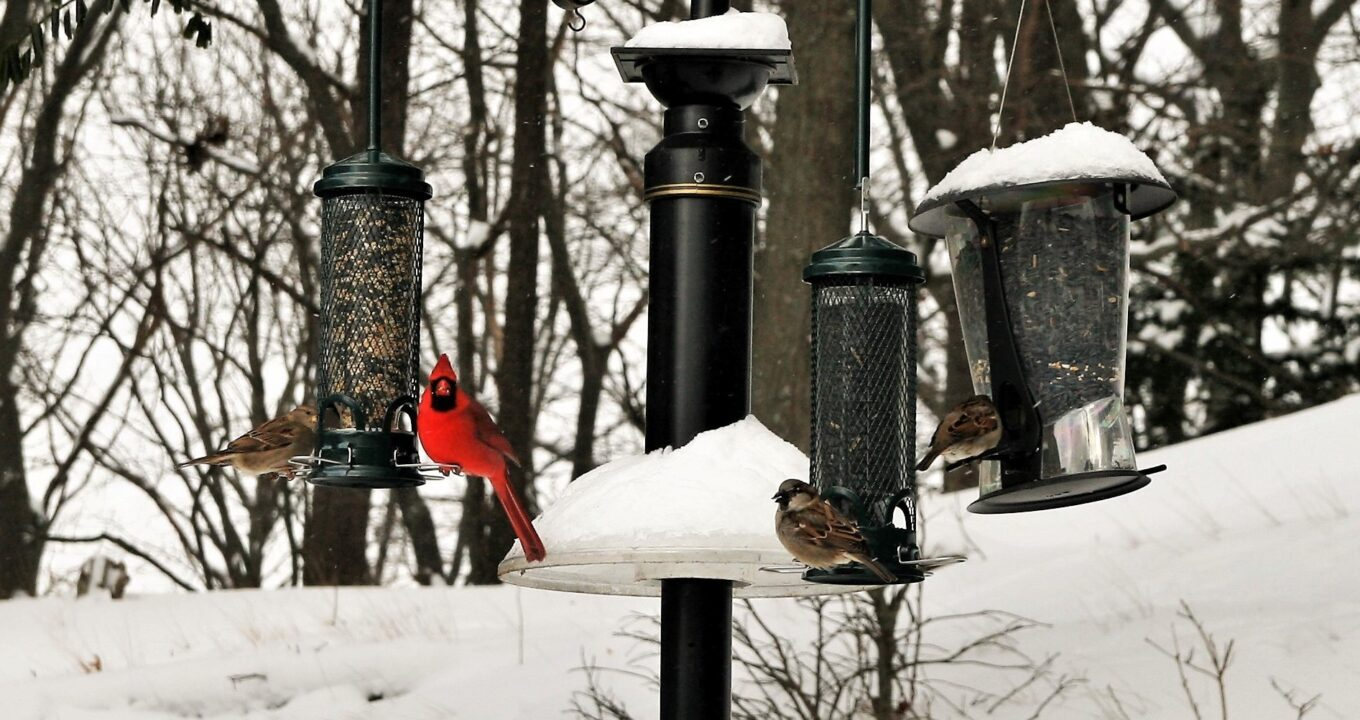 It's Time to Feed the Birds!
