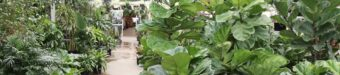 Flowerland Houseplants