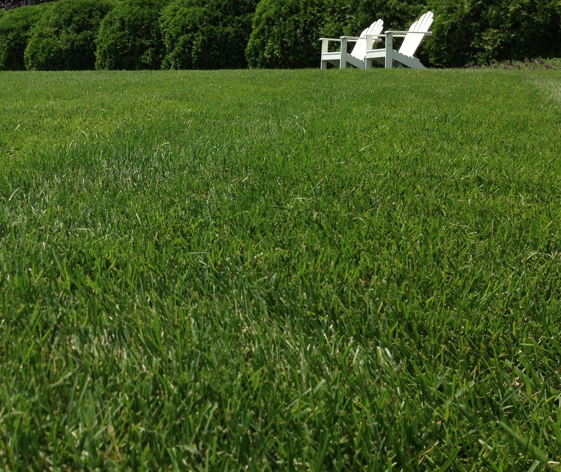 Lawn Care and Grass Seed at Flowerland