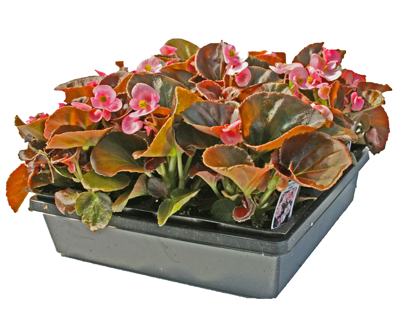 24 count Flowering-Annual-Flats at Flowerland