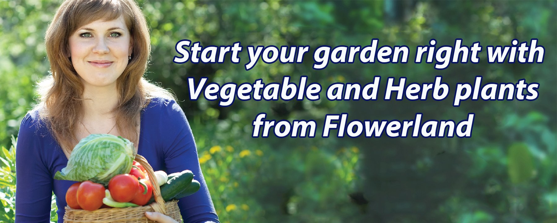 Vegetable and Herb Plants at Flowerland