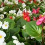 Flowering annuals at Flowerland