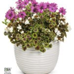 """Proven Winners Container Garden """"Flying High"""""""