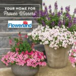 Container Garden ideas from Proven Winners for Flowerland