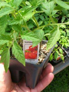 Read Tomato tag to determine type