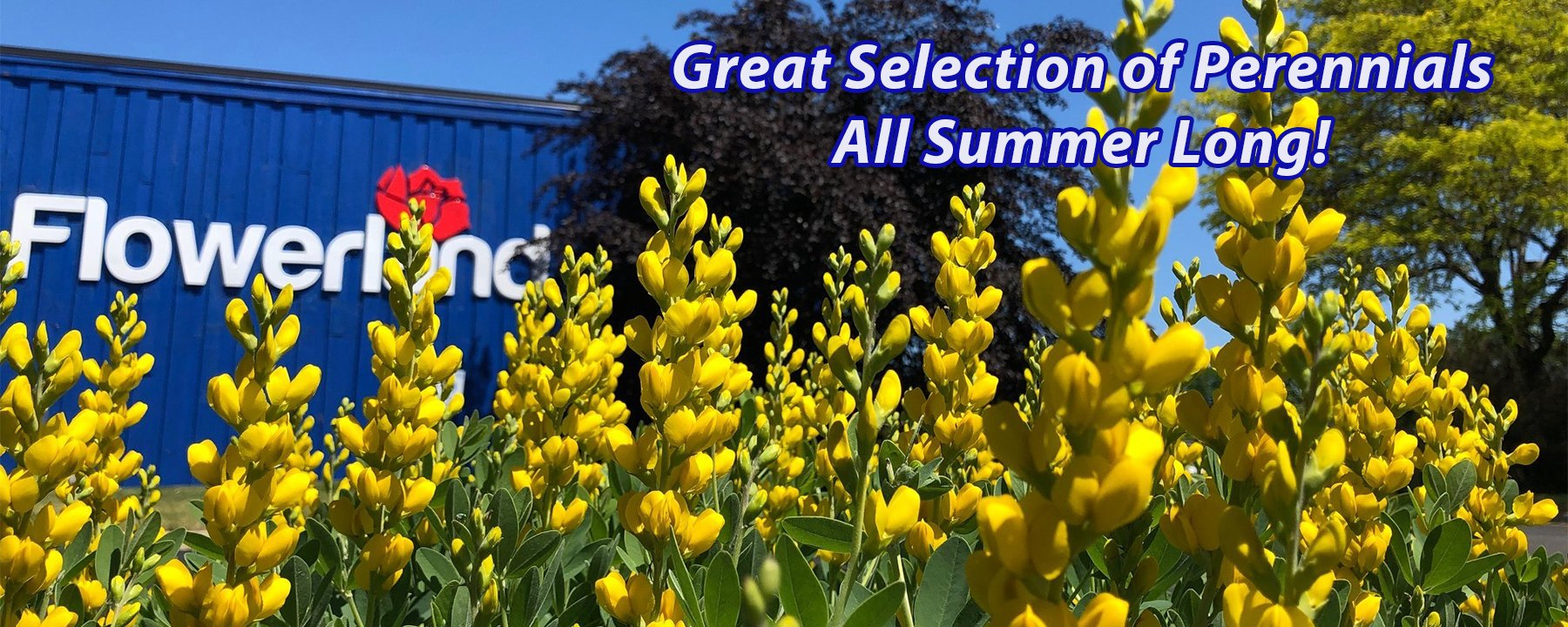 Great Selection of Perennials at Flowerland