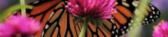 Pollinators to your garden