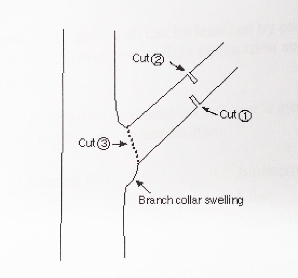 Pruning Tips Figure 3