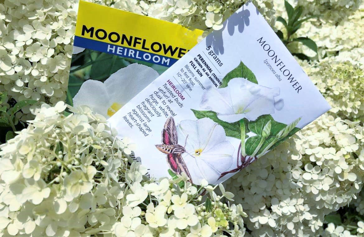 Try white flowers for August evening enchantment