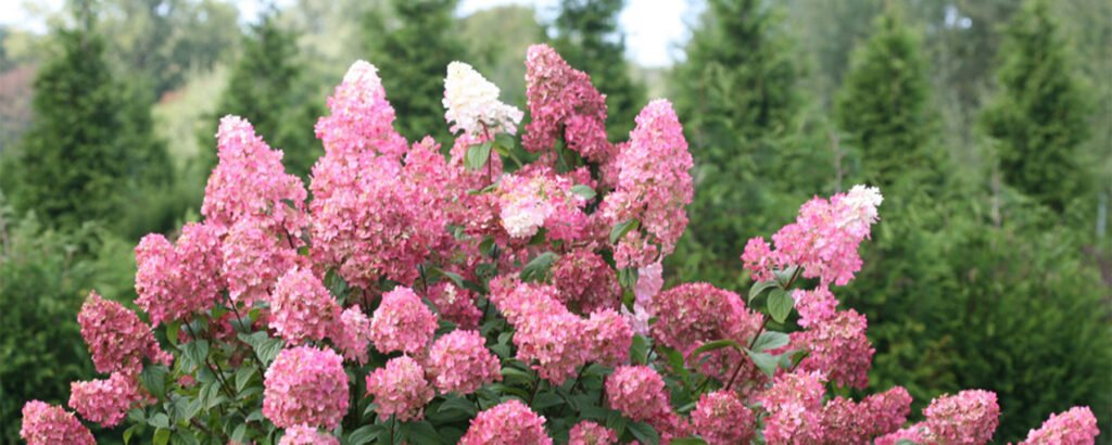 Trees and Shrubs at Flowerland