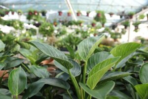 Interior plant specialists recommend one potted plant per 100 square feet to feel the benefits