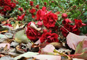 Establish a new landscape in fall!