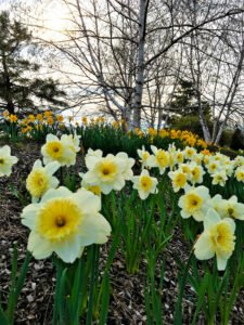 Plant now for Spring Blooms!