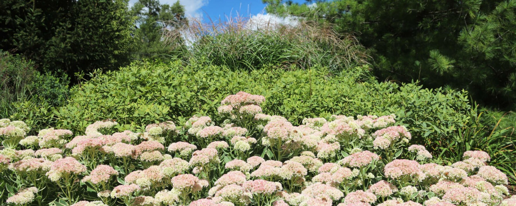 Enjoy the Fall landscape with plants from Flowerland